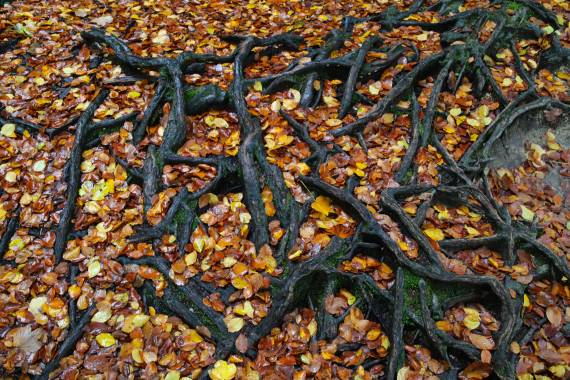 Roots, leafy roots