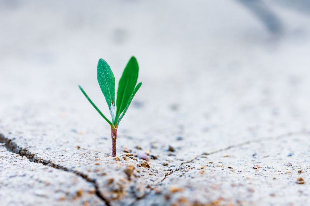 natural growth personal growth personal development (1)
