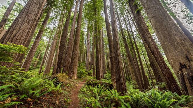 redwood-forest.ngsversion.1462358315267.adapt.1900.1