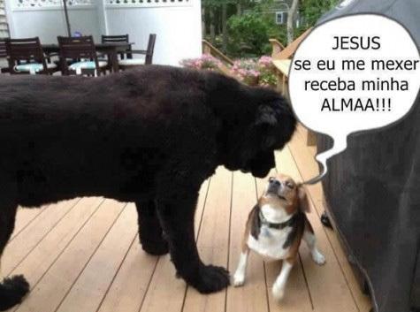 Cachorros-engraçados-e-divertidos-momento-exato