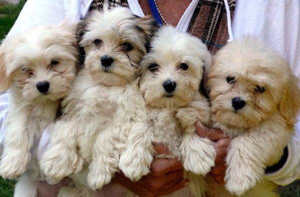 25_Longest-Living_Dogs_2867_2024