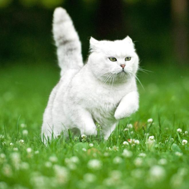 caturday-shutterstock_149320799