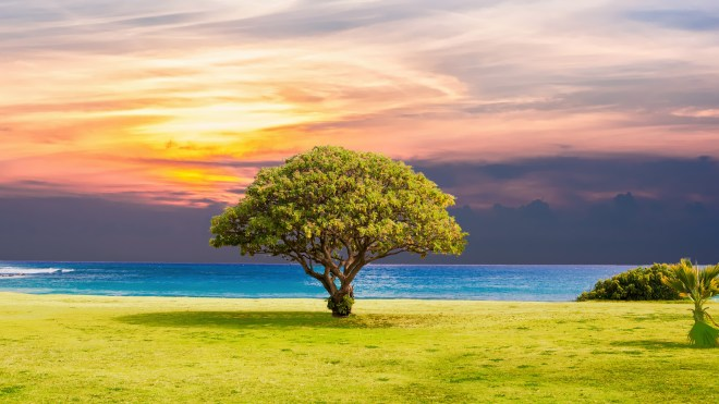 tree_grass_beach_ocean_landscape_5k-HD