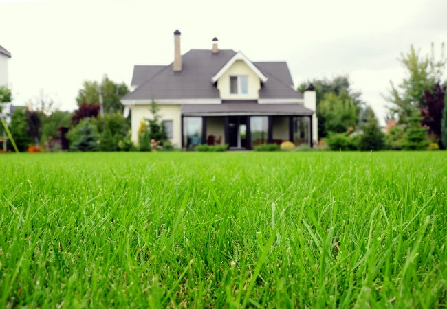 Types Of Grass Finding The Best Variety For Your Lawn Bob Vila