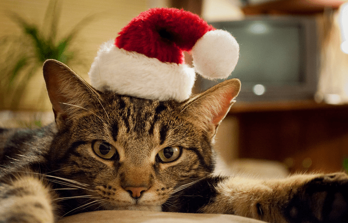 Image result for christmas cat""