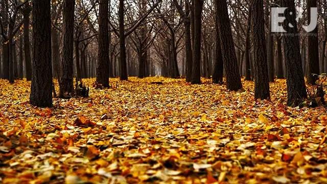 autumn-courage