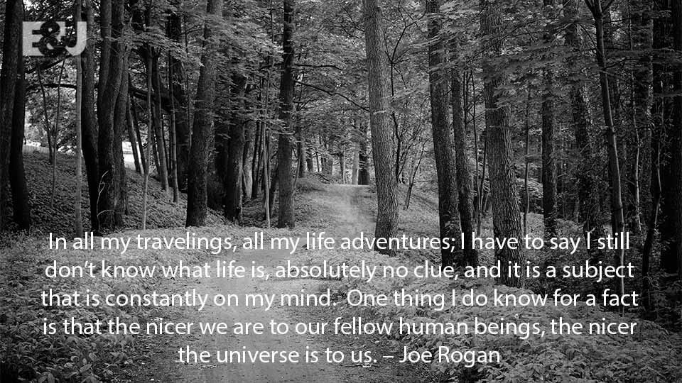 Motivational Quotes for Success Joe Rogan