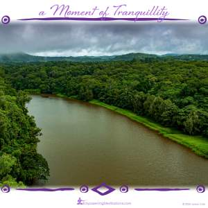 a Moment of Tranquillity - Jungle River
