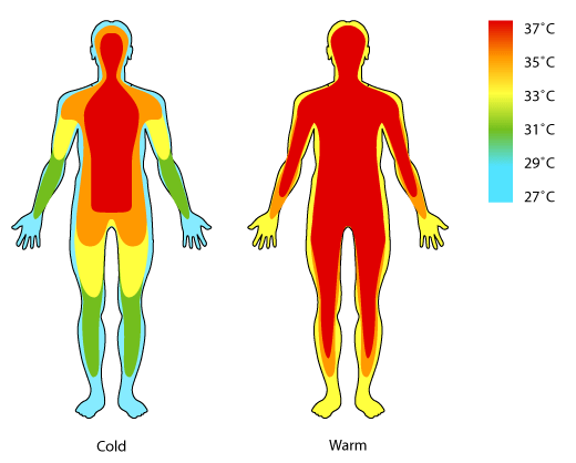 Human Body Temperature | Know-It-All