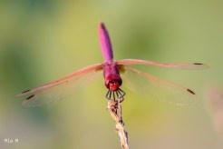 libelluleSalagou-14