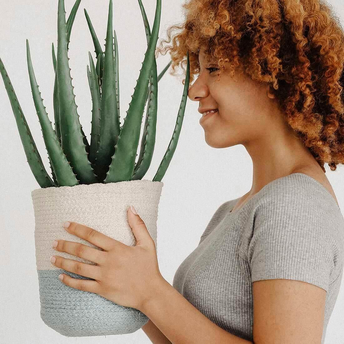 planta-crescimento-e-desconforto