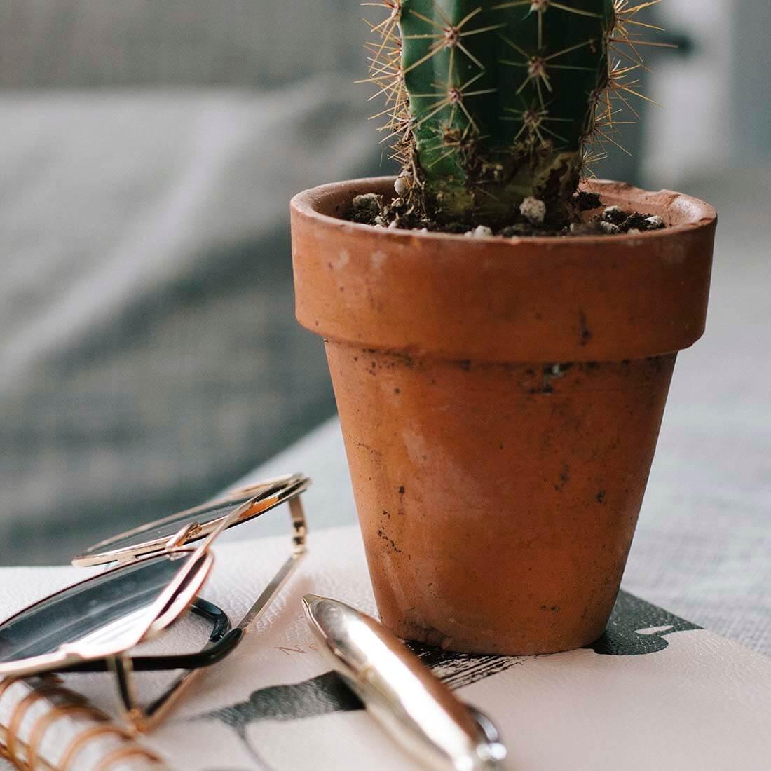 cactus-óculos-caneta