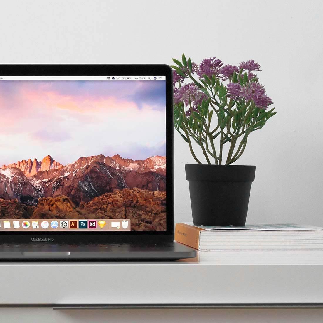 A imagem mostra um computador e um vaso de plantas