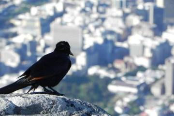 Enjoying the Table Mountain view