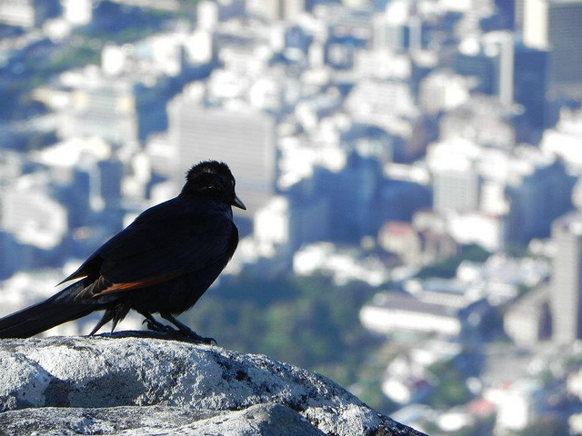 Enjoying the Table Mountain view
