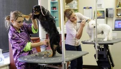 como-montar-tienda-de-animales