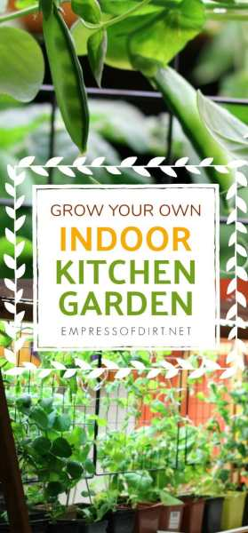 indoor gardening vegetables year round Grow an Indoor Kitchen Garden | Empress of Dirt