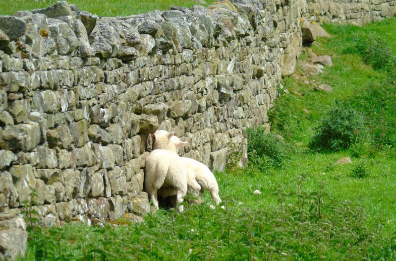 Middleham Castle - England Video 2 Middleham Castle Middleham Castle in Wensleydale in North Yorkshire wasa worthwhile stop in England. We had a great time exploring the castle, which is n