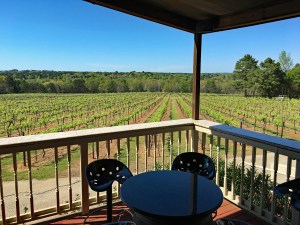 a view of rows of Keipersol's grape vines from the porch