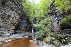 experiencing nature in Watkins Glen