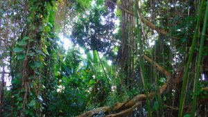 tropical jungle in Biosphere 2
