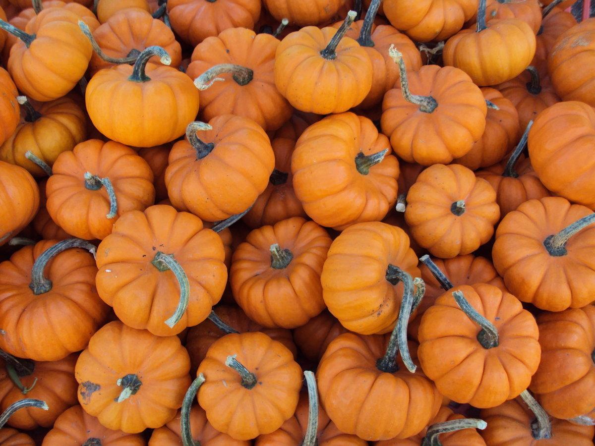 fall decor, pumpkin bread recipe, pumpkin muffin recipe, pumpkin loaf recipe, blue fall decor, fall decor ideas