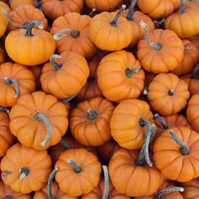 harvest pumpkin bread, fall recipe, pumpkin bread, pumpkin muffins