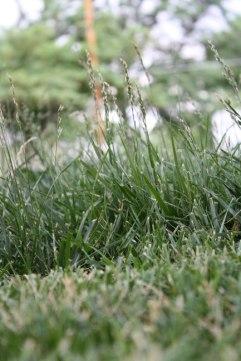 meadow-1