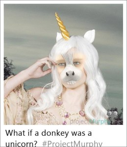 What If a Donkey Was a Unicorn?