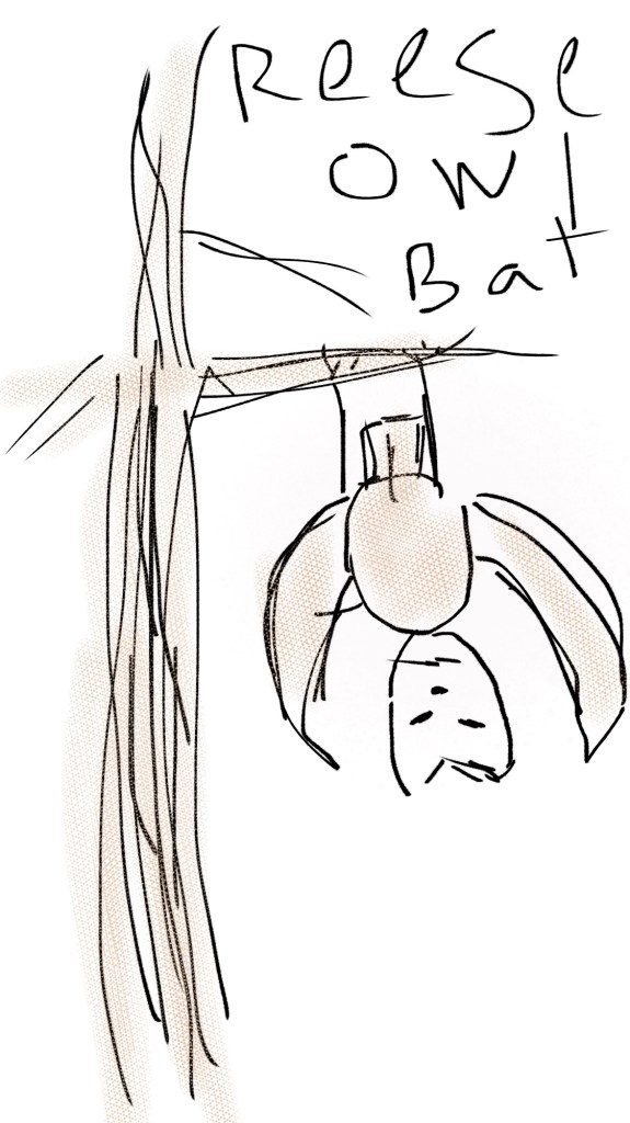 Reese Owl Bat