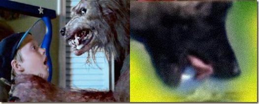 Poisoned Werewolf copy