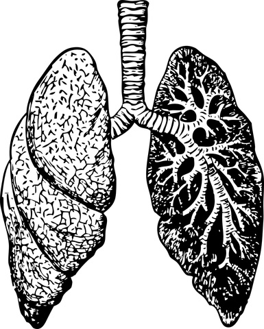 Medical Terminology Pulmon Lung