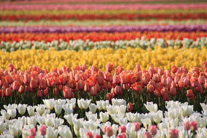 EMT Training Washington State Tulip Fields