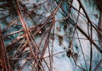 """2015/06/02 – """"Growth"""" Lomography Color 400 at ISO400."""