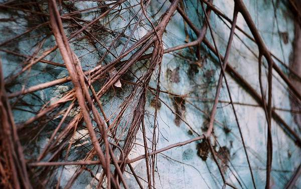 Growth – Shot on Lomography Color Negative 400 at EI 400 (120 format)