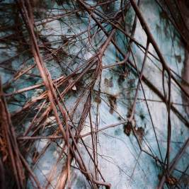 "2015/06/02 – ""Growth"" Lomography Color 400 at ISO400."