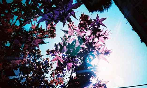 Purple Flare – Shot on LomoChrome Purple XR 100-400 at EI 400 (35mm format)