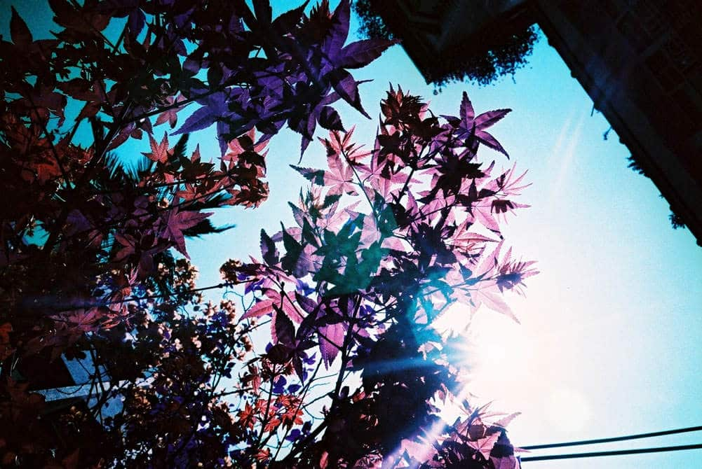Purple Flare - LomoChrome Purple XR 100-400 (35mm)