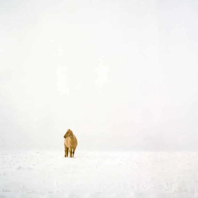 """Prairie Livin'"", Southern Alberta - Rolleiflex 3.5F   Kodak Portra 400"