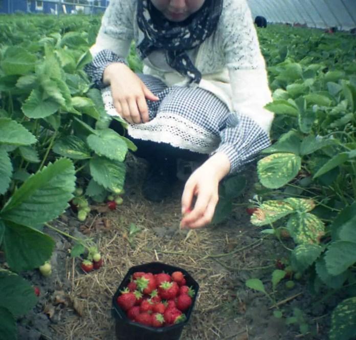 Jonas - Diana Mini - Picking berries