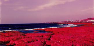 2015-07-28 - Red Algae - Kodak AEROCHROME III 1443 shot at EI 400. Color infrared aerial surveillance film in 120 format shot as 6x6. Shot with #21 orange filter.