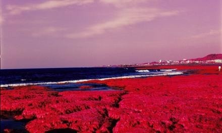 Red Algae – Kodak AEROCHROME III 1443 (120)