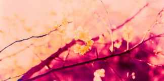 Blossom blaze - Kodak Aerochrome III Infrared Film 1443 shot at ISO200