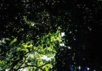 Emerald canopy - Fuji Velvia 50 shot at ISO50