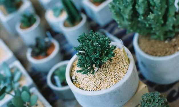 Succulents – Shot on Kodak High Definition 200 at EI 200 (35mm format)