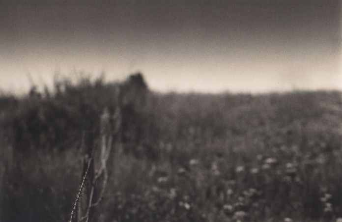Edge of a field - 200mm lens at f4, Ilford FP4.