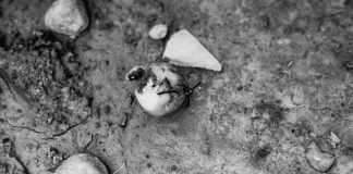 Wax apple wasp - Efke KB25 shot at ISO25. Black and white negative film in 35mm format.