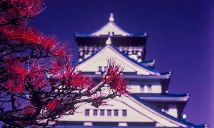 Osaka infrared – Kodak AEROCHROME III 1443 (120)