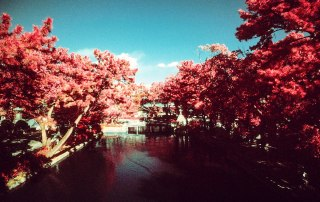 Tranquility - Kodak Aerochrome III (1443) shot at ISO400. Color infrared slide film in 35mm format. Orange #21 filter.