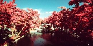Tranquility - Kodak Aerochrome III (1443) shot at ISO400. Color infrared slide film in 35mm format. Orange #21 filter.